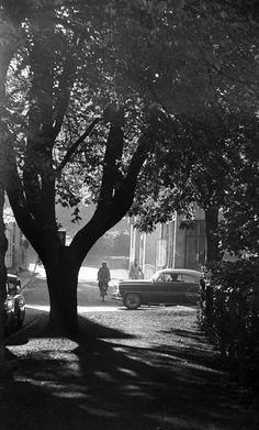 Park i Uppsala Uppsala, Park, Plants, Outdoor, Vintage, Pictures, Outdoors, Parks, Plant