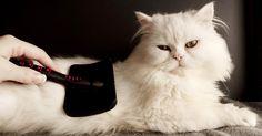 Hygiène du chat  Comment laver quotidiennement son chat ou son chien ?