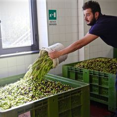 The oil crisis and Sicilian olive oil