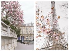 Paris in March - The Viennese Girl