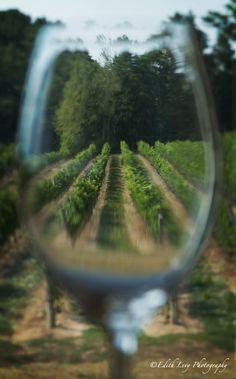 Through the Looking Glass...okay Wine Glass - Niagara on the Lake, Ontario
