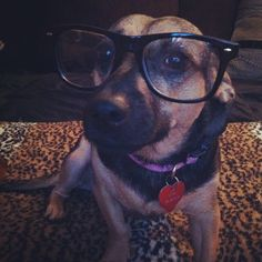 My 3 yr. old mutt Lexi being a hipster. So in love with her. #Pet #Animal #Mutt