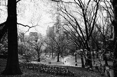 Central Park in april by Nicola Colella on 500px