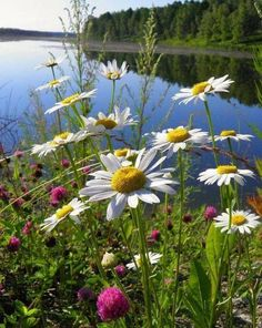The photo – GDK – Join in the world of pin Sunflowers And Daisies, Wild Flowers, Beautiful Flowers, All Nature, Amazing Nature, Beautiful World, Beautiful Places, June Flower, Daisy Love