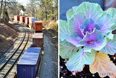Live cargo train and flowers in my Vinings neighborhood.