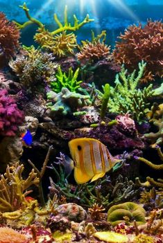 Photo about Tropical fish on a coral reef. Image of water, coral, fish - 22404192 Under The Ocean, Sea And Ocean, Fish Ocean, Ocean Life Tattoos, Fauna Marina, Salt Water Fish, Water Animals, Underwater Life, Beautiful Ocean