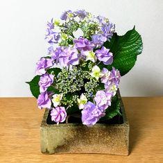 花材 :  ガクアジサイ