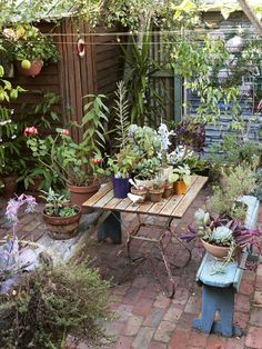 Sandra's backyard with many plants and succulents which she has propagated herself from borrowed clippings from friends. Photo – Eve Wilson. Production – Lucy Feagins / The Design Files.