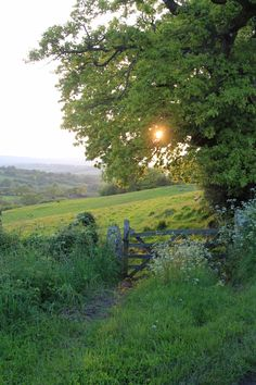 Through a gate, Linscott, England.