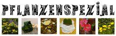 Pflanzenspezial auf http://liebenswertekleinedinge.blogspot.de/