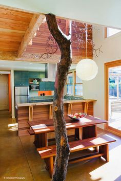 24 best trees tree trunks logs for support beams images tree rh pinterest com