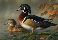 Wood Ducks: Plenty of these killed. A few more wouldn't hurt!