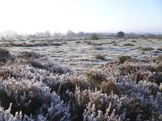 2013-01-13  Winter op de heide van de Koningsbelten