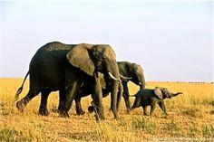 I'm coming back as an elephant.