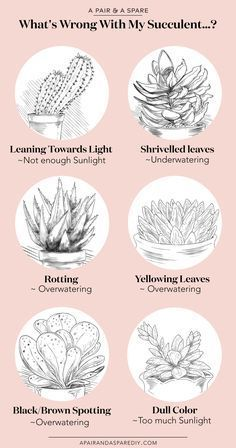 Here's How You Can Save Your Succulent!