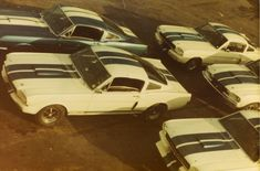 Vintage '78 – Shelby, Shelby, Shelby