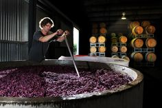 Vintage time at Lowe Wines. Winemaker Liam Heslop plunges the grapes. Photo by Amber Hooper. Best Kept Secret, Cabernet Sauvignon, Wine Country, Wine Recipes, Wines, Amber, Projects, Community, Australia