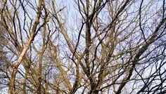 Een vroeg voorjaarszonnetje verwarmt de takken van deze grote, oude boom.