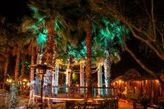 Boojum Tree's Hidden Gardens in Phoenix - Alan Hajek Photography