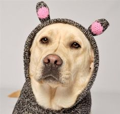 Piggy Hoodie Sweater @ http://doggyinwonderland.com/item_1253/Piggy-Hoodie-Sweater.htm starting at $36.95