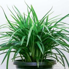 Plants for Shade Australian Plants Online Best Plants For Shade, Full Sun Plants, Sun Loving Plants, Shade Plants, Pergola On The Roof, Covered Pergola, Pergola Plans, Pergola Kits, Patio Roof
