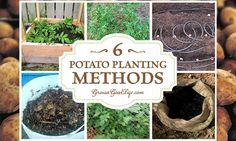 6 Different Methods Of Growing Potatoes in your Backyard