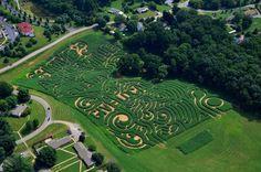 Corn Maze, Asheville, NC, 2013