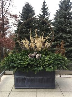 Planter tip: A halo made of deciduous plants that lifts a middle … – Container Gardening Outdoor Christmas Planters, Christmas Urns, Outdoor Christmas Decorations, Christmas Wreaths, Christmas Crafts, Garden Works, Garden Art, Garden Design, Garden Hose Wreath