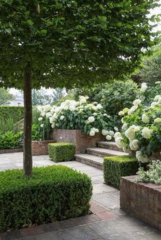 This garden relies on green, green and more green, with a bit of fresh green/white from the Hydrangea Annabelle. Box-pleached hornbeam do a job of screening a tennis court and spa from each other, whilst the overflowing beds create privacy in this sunken spot. #jothompsongardendesign #gardendesign #gardendesignlondon #ukgardendesign #landscapearchitecture