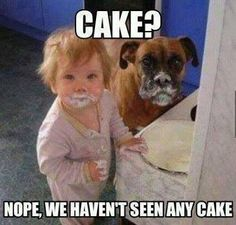 Cake? What Cake? ;-) / George Takei / funny pics / dog humor / funny kids