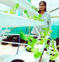Hydroponics NFT system India Hydroponics, India, Happy, Goa India, Hydroponic Gardening, Ser Feliz, Indie, Aquaponics, Indian