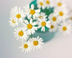 White On White Still Life | White Daisy Print, Flower Still Life, Floral Home Decor, Flower ...