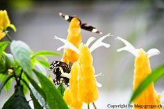 Papiliorama – Gregors Blog Blog, Animals, Sloth Animal, Small Animals, Swiss Guard, Animales, Animaux, Blogging, Animal