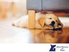 ¿Es bueno que mi perro duerma conmigo? LA MEJOR CLÍNICA VETERINARIA DE MÉXICO. Dormir con tu perro es una experiencia muy bonita en la que reforzarán lazos, lo que ocurre es que si siempre lo acostumbras a que duerma contigo en tu cama nunca será capaz de hacerlo por su cuenta. En Clínica Veterinaria del Bosque, contamos con médicos especialistas para la atención de tu mascota. #veterinariadelbosque