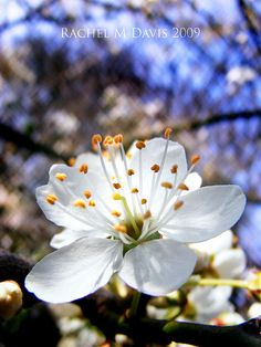white flowers in spring Most Beautiful Flowers, Pretty Flowers, White Flowers, Spring Blossom, Cherry Blossom, Spring Sign, Spring Flowers, Shrubs, Mother Nature