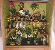 Orchid Display by Karl Blindheim