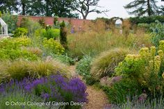 Mixed border, Planting, design, herbaceous, perennials, Lavender, Euphorbia, Stipa,