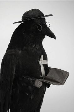 funeral-wreaths: A fine piece of Victorian taxidermy, a raven as a priest.