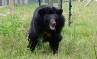 Don't let 104 moon bears be evicted from their sanctuary! Click to take action!