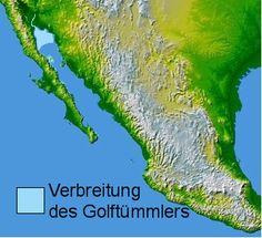 """Kalifornischer Schweinswal – Wikipedia """"Der Kalifornische Schweinswal (Phocoena sinus), auch Golftümmler oder Vaquita genannt, ist eine Walart aus der Familie der Schweinswale (Phocoenidae). Er bewohnt nur ein kleines Gebiet im Nordwesten des Golfs von Kalifornien und zählt zu den bedrohtesten Säugetierarten überhaupt, was auch durch die Aufnahme in die IUCN-Liste der hundert am stärksten vom Aussterben bedrohten Arten [1] unterstrichen wird."""""""
