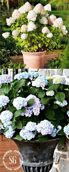 16 Colorful Shade Garden Pots and Plant Lists - Page 2 of 2 - A Piece Of Rainbow