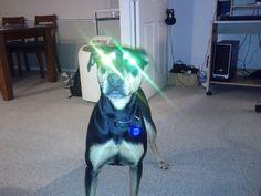 Alien gaze! My Cola - huntaway doberman x