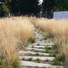 Image result for garden path landscape architecture
