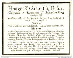 Original-Werbung/ Anzeige 1924 - GÄRTNEREI / SAMENBAU / SAMENHANDLUNG  - HAAGE & SCHMIDT ERFURT - ca. 100 x 75 mm
