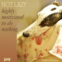 This is what my Italian greyhound thinks Greyhound Rescue, Greyhound Art, Italian Greyhound, Lurcher, Hound Dog, Ibizan Hound, Beautiful Dogs, Dog Life, Funny Dogs