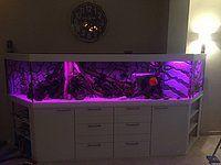 TC420 aquarium led strip set van ledstripkoning – inspirerend!