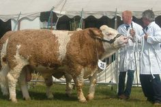 Agricultural & Country Show: Event Catering: North West Mobile Event Caterers: Traditional Catering Specialists, Wigan, Lancashire, North West Catering Services, North West, Traditional, Country, Animals, Animales, Restaurant Service, Rural Area, Animaux