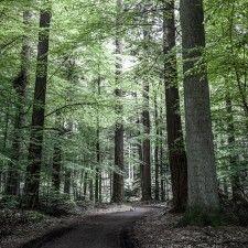 Danish Forest - Silkeborg, Denmark by Foto Factory