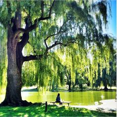 A beautiful day in the Boston Commons...