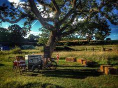 My ice cream tricycle under a big oak tree, for a wedding in Surrey. Wedding inspiration. Oak Tree, Tricycle, Surrey, Special Events, Plum, Wedding Inspiration, Ice Cream, Big, Outdoor Decor